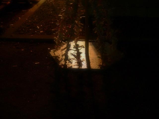 M1014331_2048x1536_補正済.jpg